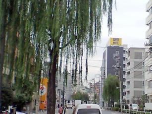 柳並木の広々した「元なぎさ通り」沿い。