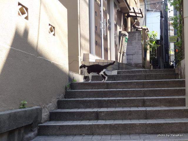 神楽坂から旅館 和可菜に通じる石段